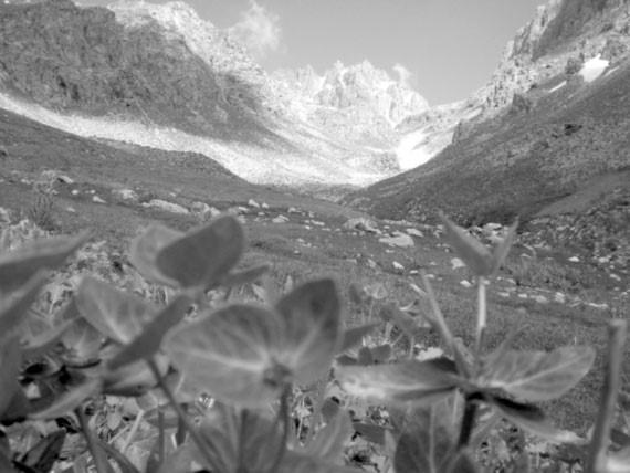 Трагедия на плато Уртабоз