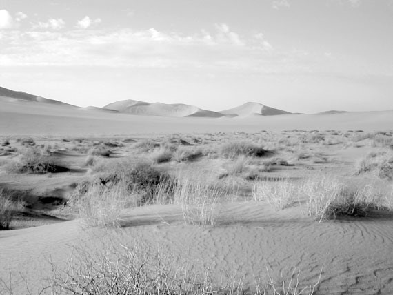 Сахара была цветущей