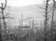 Гибнущий лес