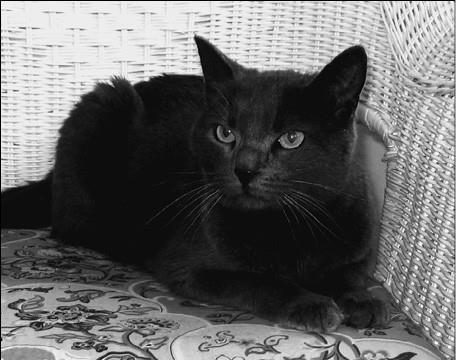 Души графских кошек