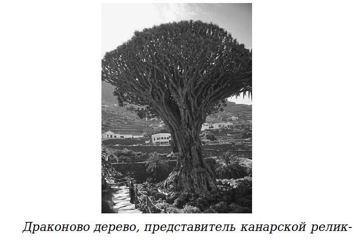 Загадки Африки. Сады Гесперид